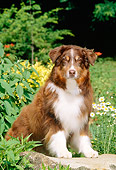 DOG 01 CE0127 01