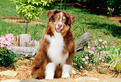 DOG 01 CE0128 01