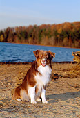 DOG 01 CE0129 01