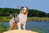 DOG 01 CE0130 01
