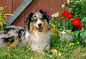 DOG 01 CE0132 01