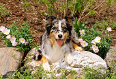 DOG 01 CE0133 01