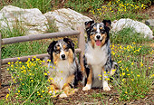 DOG 01 CE0135 01