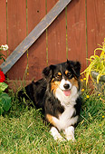 DOG 01 CE0137 01