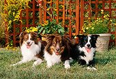 DOG 01 CE0140 01