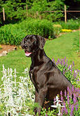 DOG 01 CE0142 01