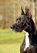 DOG 01 CE0143 01