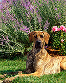 DOG 01 CE0144 01
