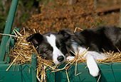 DOG 01 CE0148 01