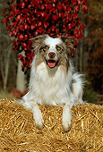 DOG 01 CE0151 01