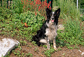 DOG 01 CE0153 01