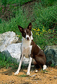 DOG 01 CE0154 01
