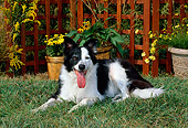 DOG 01 CE0157 01