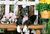 DOG 01 CE0158 01