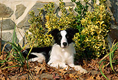 DOG 01 CE0159 01