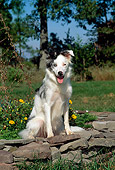 DOG 01 CE0160 01