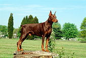 DOG 01 CE0163 01