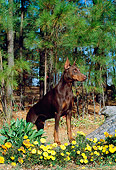 DOG 01 CE0164 01