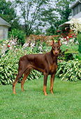DOG 01 CE0166 01