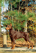 DOG 01 CE0167 01