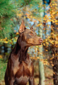 DOG 01 CE0168 01