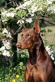 DOG 01 CE0169 01