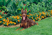 DOG 01 CE0171 01