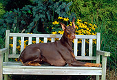 DOG 01 CE0172 01
