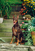 DOG 01 CE0174 01