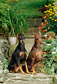 DOG 01 CE0175 01