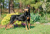 DOG 01 CE0177 01