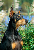 DOG 01 CE0178 01