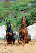 DOG 01 CE0179 01