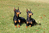 DOG 01 CE0180 01