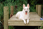 DOG 01 CE0182 01