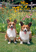 DOG 01 CE0183 01