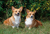 DOG 01 CE0184 01