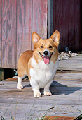 DOG 01 CE0186 01