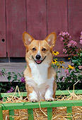 DOG 01 CE0188 01
