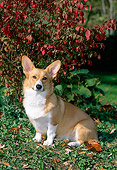 DOG 01 CE0189 01