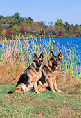 DOG 01 CE0192 01