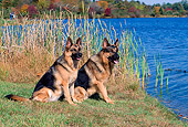 DOG 01 CE0193 01