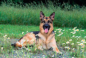 DOG 01 CE0205 01