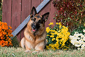 DOG 01 CE0206 01