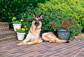 DOG 01 CE0207 01