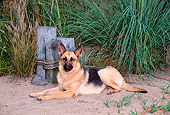 DOG 01 CE0208 01
