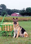 DOG 01 CE0211 01