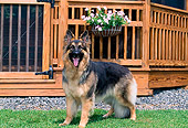 DOG 01 CE0213 01