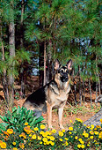DOG 01 CE0214 01