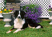 DOG 01 CE0217 01